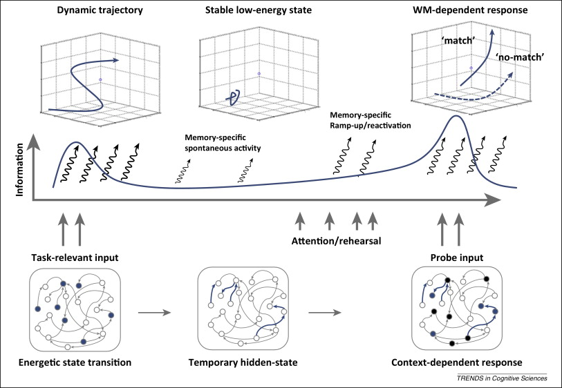 'Activity-silent' working memory in prefrontal cortex: a