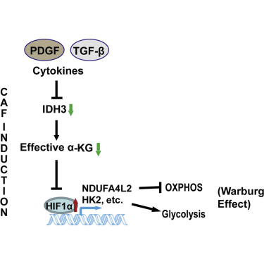 Metabolic Reprogramming of Cancer-Associated Fibroblasts