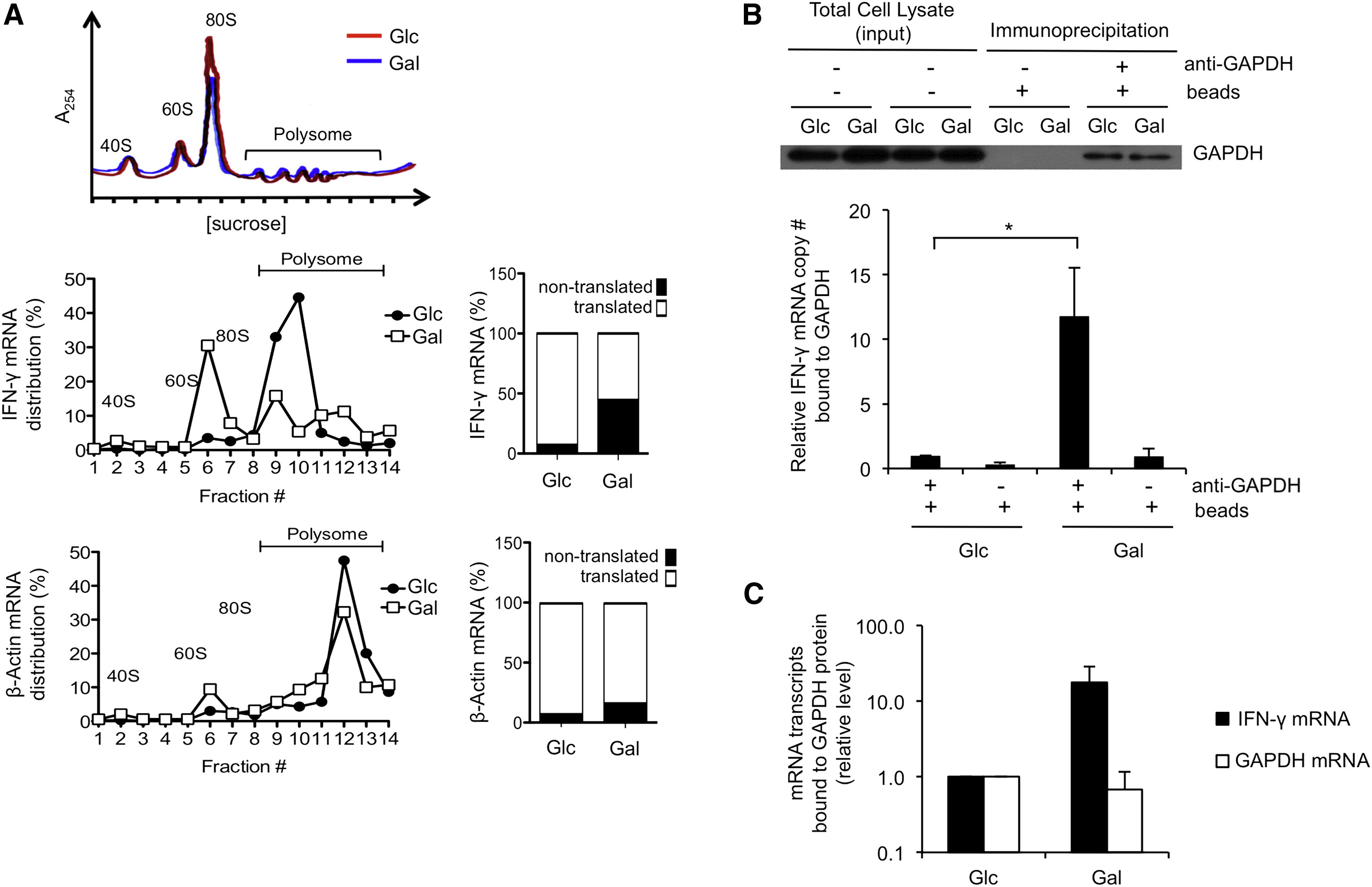 Posttranscriptional Control of T Cell Effector Function by