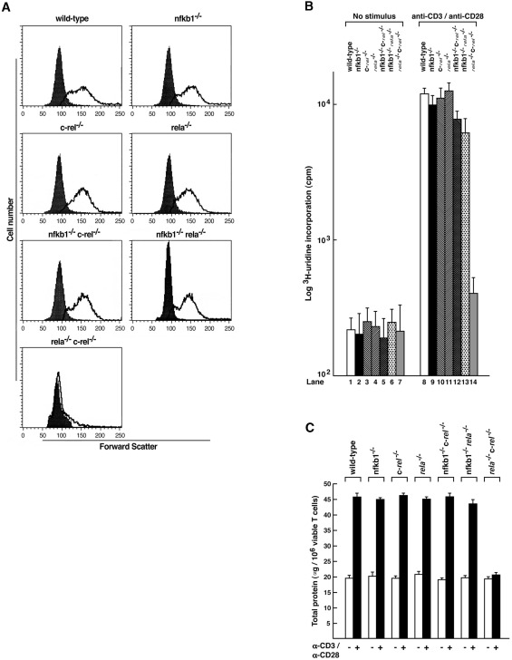 The Mitogen-Induced Increase in T Cell Size Involves PKC