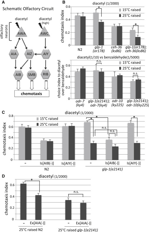 Gonadal Maturation Changes Chemotaxis Behavior and Neural