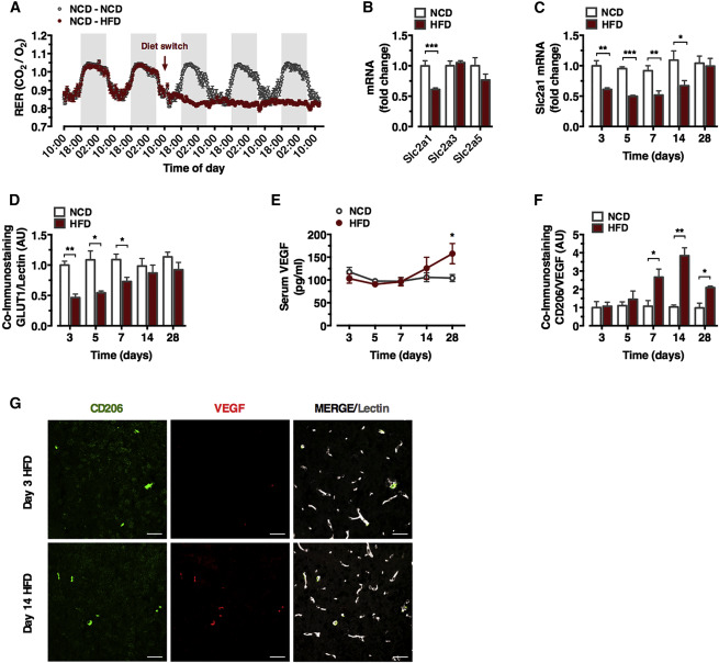 Myeloid-Cell-Derived VEGF Maintains Brain Glucose Uptake