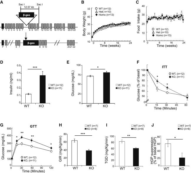APPL1 Potentiates Insulin Sensitivity by Facilitating the