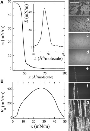Solid Character of Membrane Ceramides: A Surface Rheology