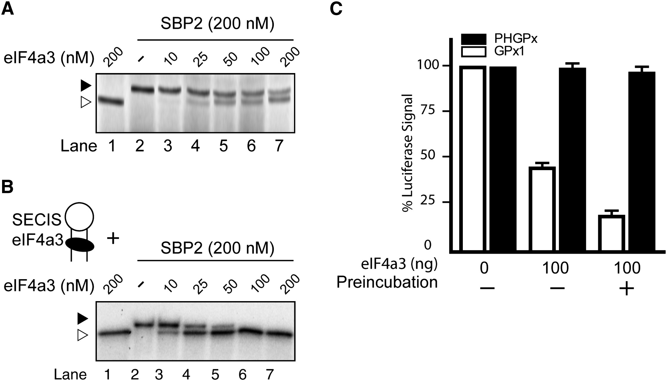 Eukaryotic Initiation Factor 4a3 Is A Selenium Regulated