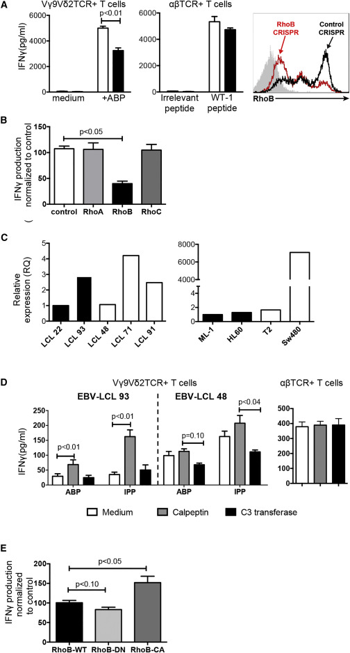RhoB Mediates Phosphoantigen Recognition by Vγ9Vδ2 T Cell