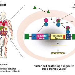In Vivo Gene Therapy Diagram Stress Strain For Cast Iron Progress And Potential Based Medicines Molecular