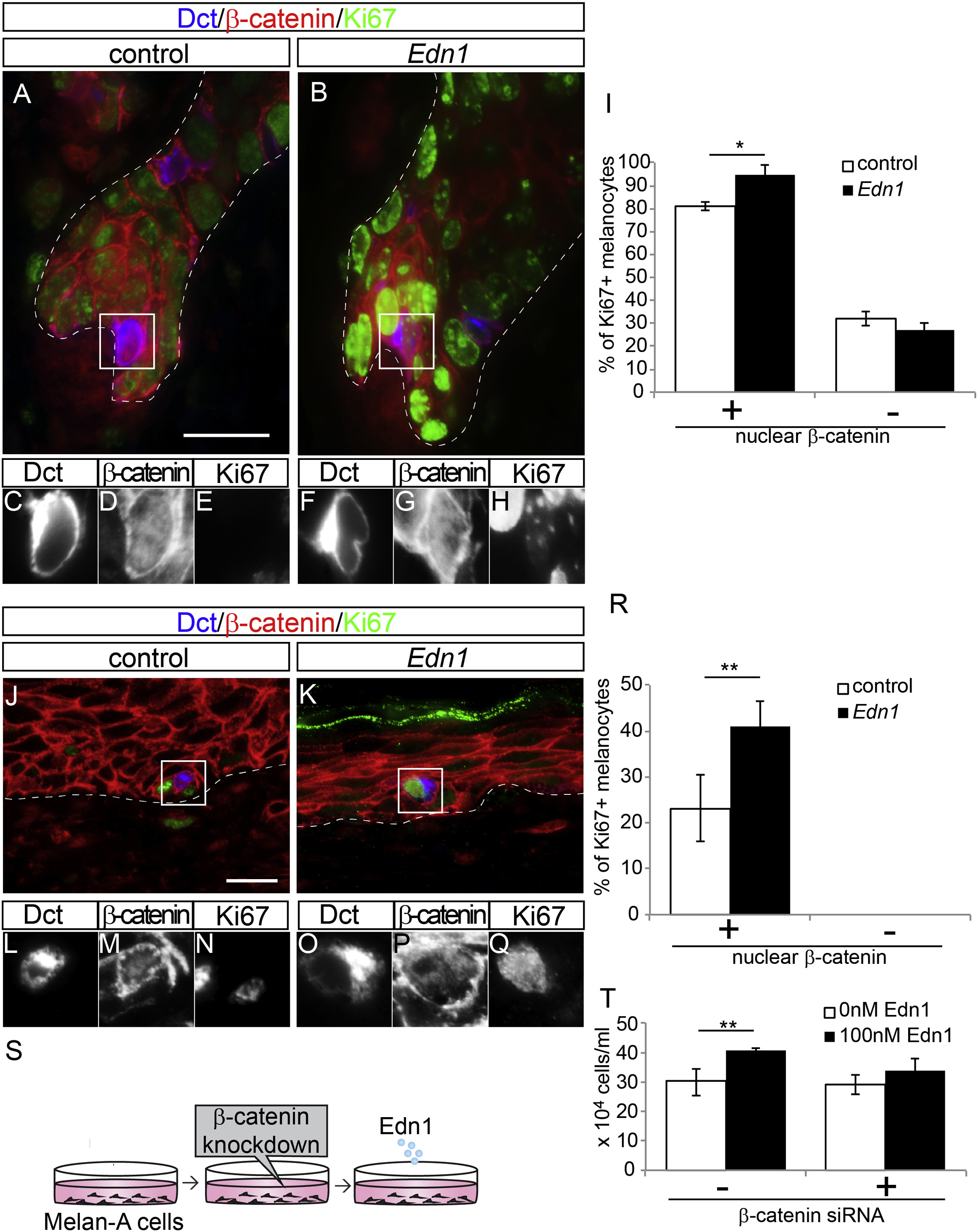 Ednrb Governs Regenerative Response Of Melanocyte Stem Cells By Crosstalk With Wnt Signaling