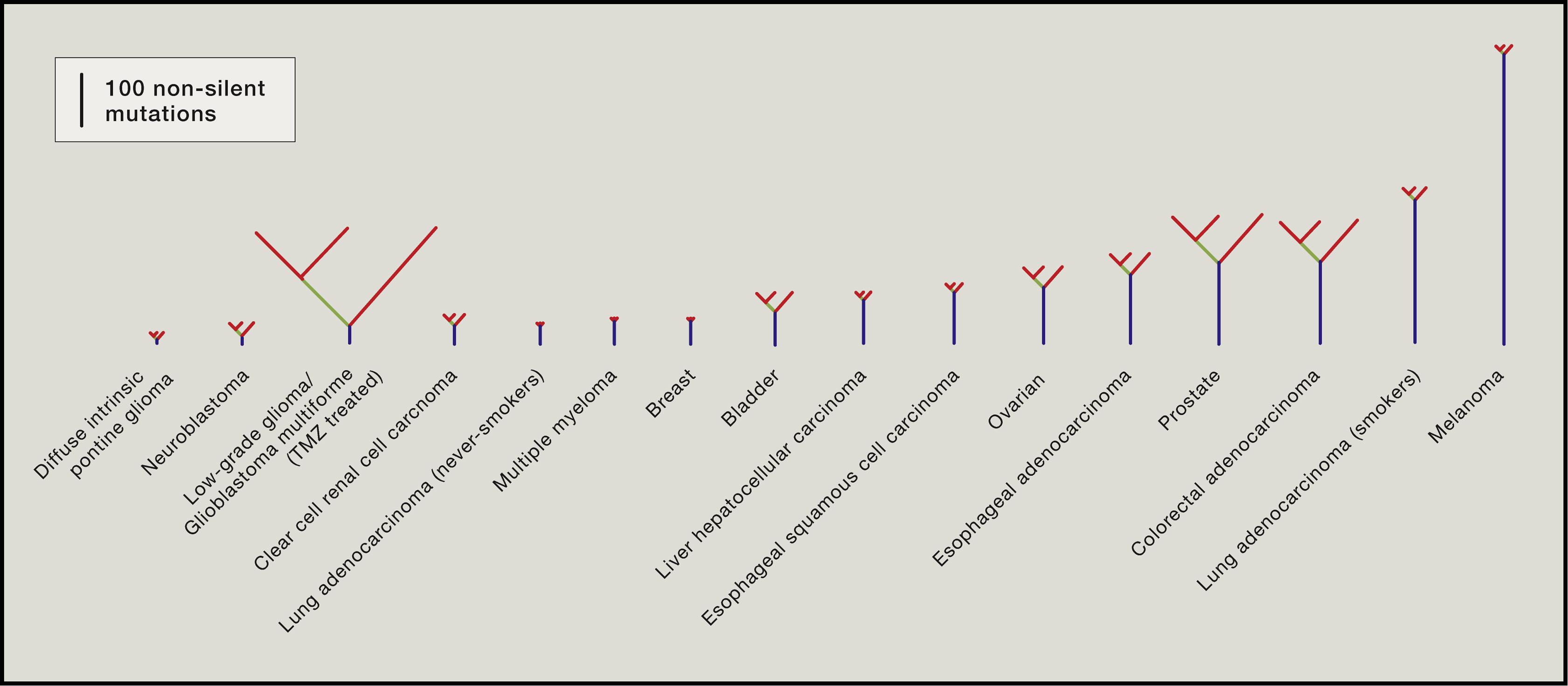 Clonal Heterogeneity and Tumor Evolution: Past, Present