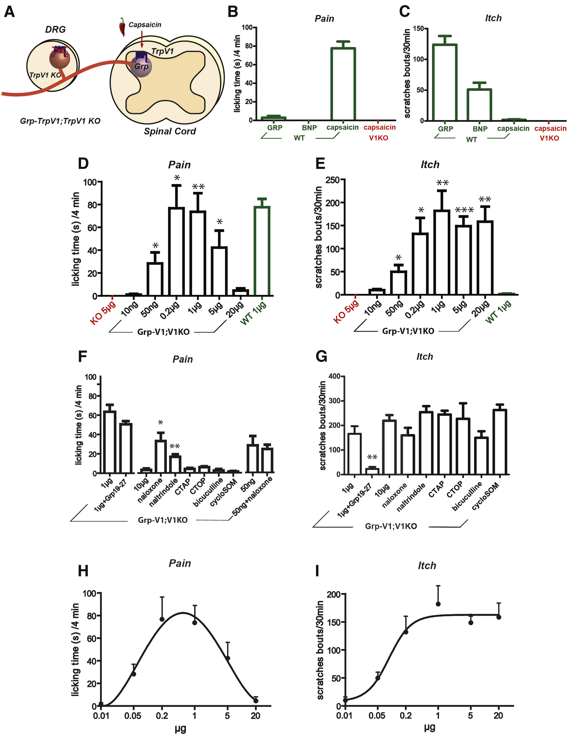 Leaky Gate Model Intensity Dependent Coding Of Pain And