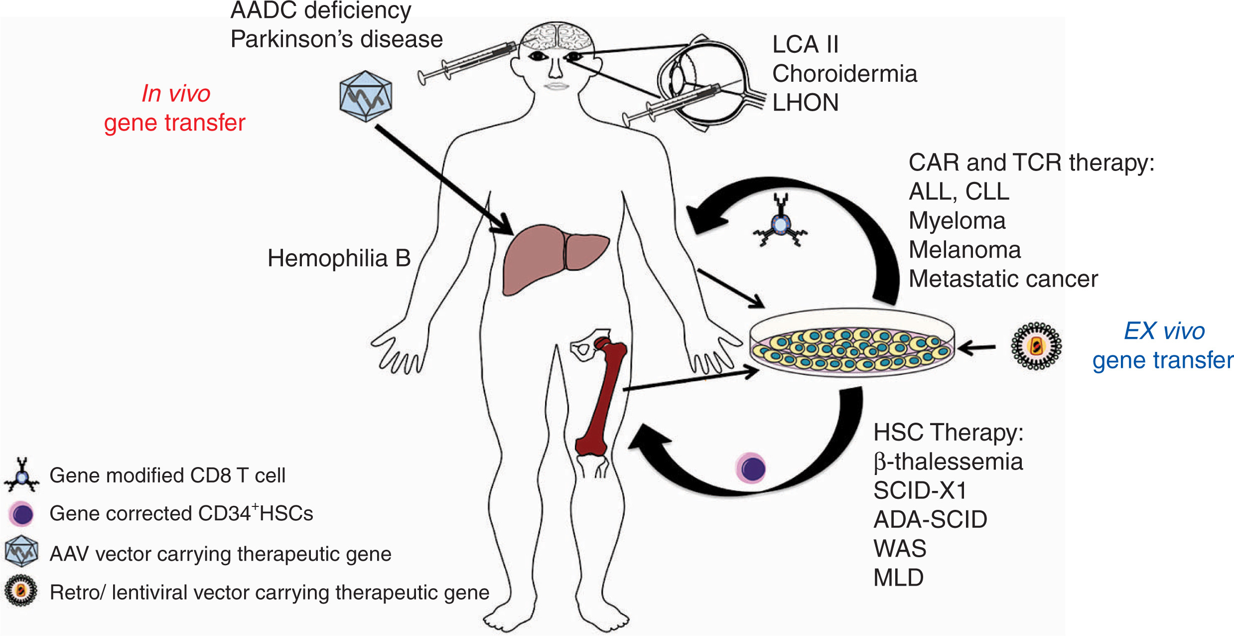 in vivo gene therapy diagram 90 honda accord fuel pump wiring clinical development of results and lessons