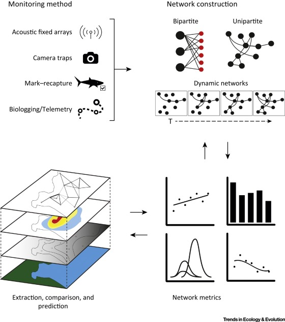 Emerging Network-Based Tools in Movement Ecology: Trends