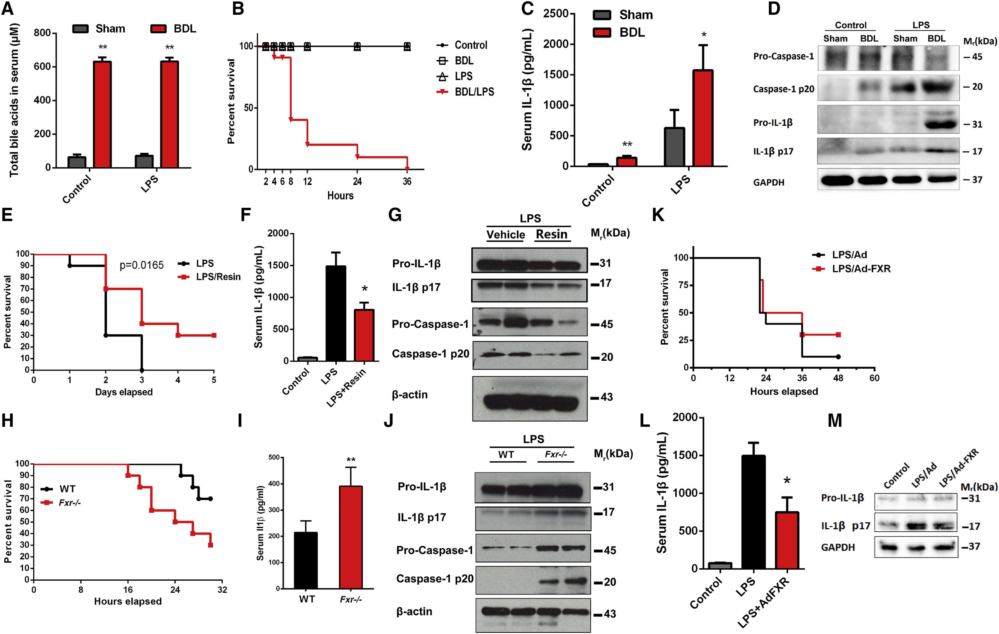Farnesoid X Receptor Regulation Of The Nlrp3 Inflammasome Underlies Cholestasis Associated