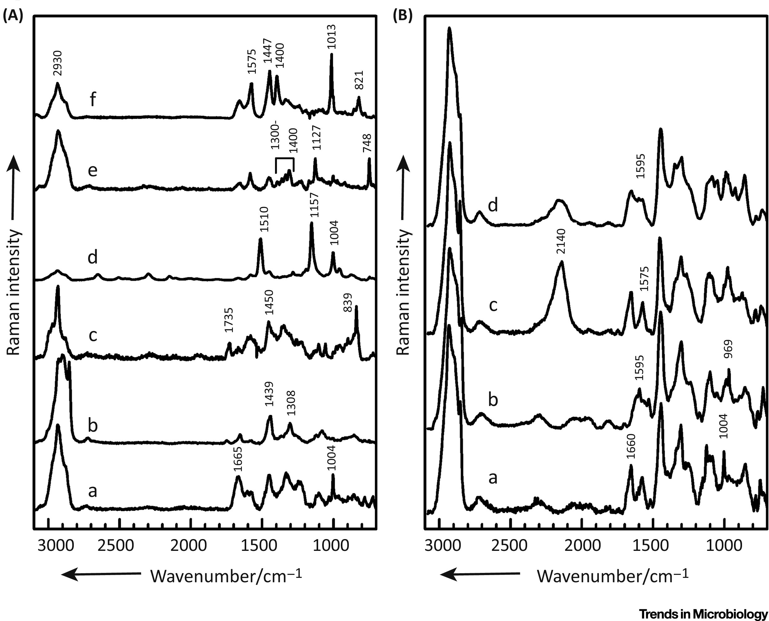 Cultivation Free Raman Spectroscopic Investigations Of Bacteria Trends In Microbiology