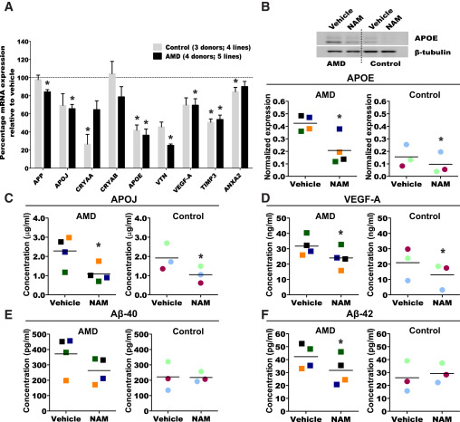 Nicotinamide Ameliorates Disease Phenotypes in a Human