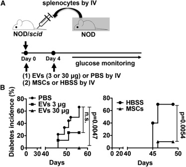 MSC-derived Extracellular Vesicles Attenuate Immune
