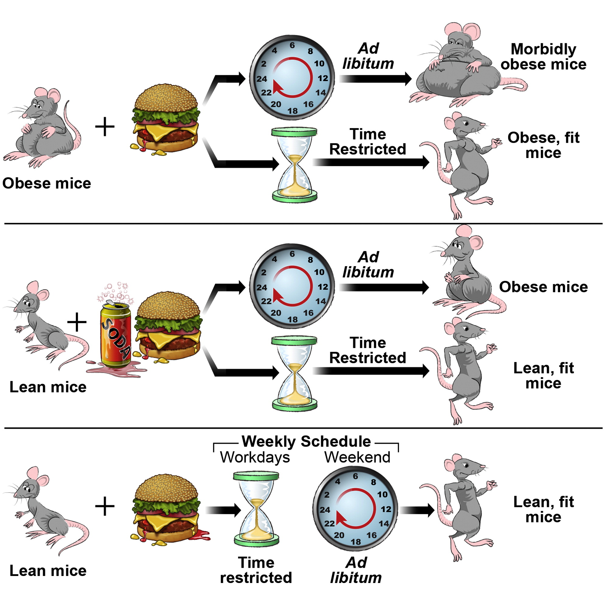 Time Restricted Feeding Is A Preventative And The Utic