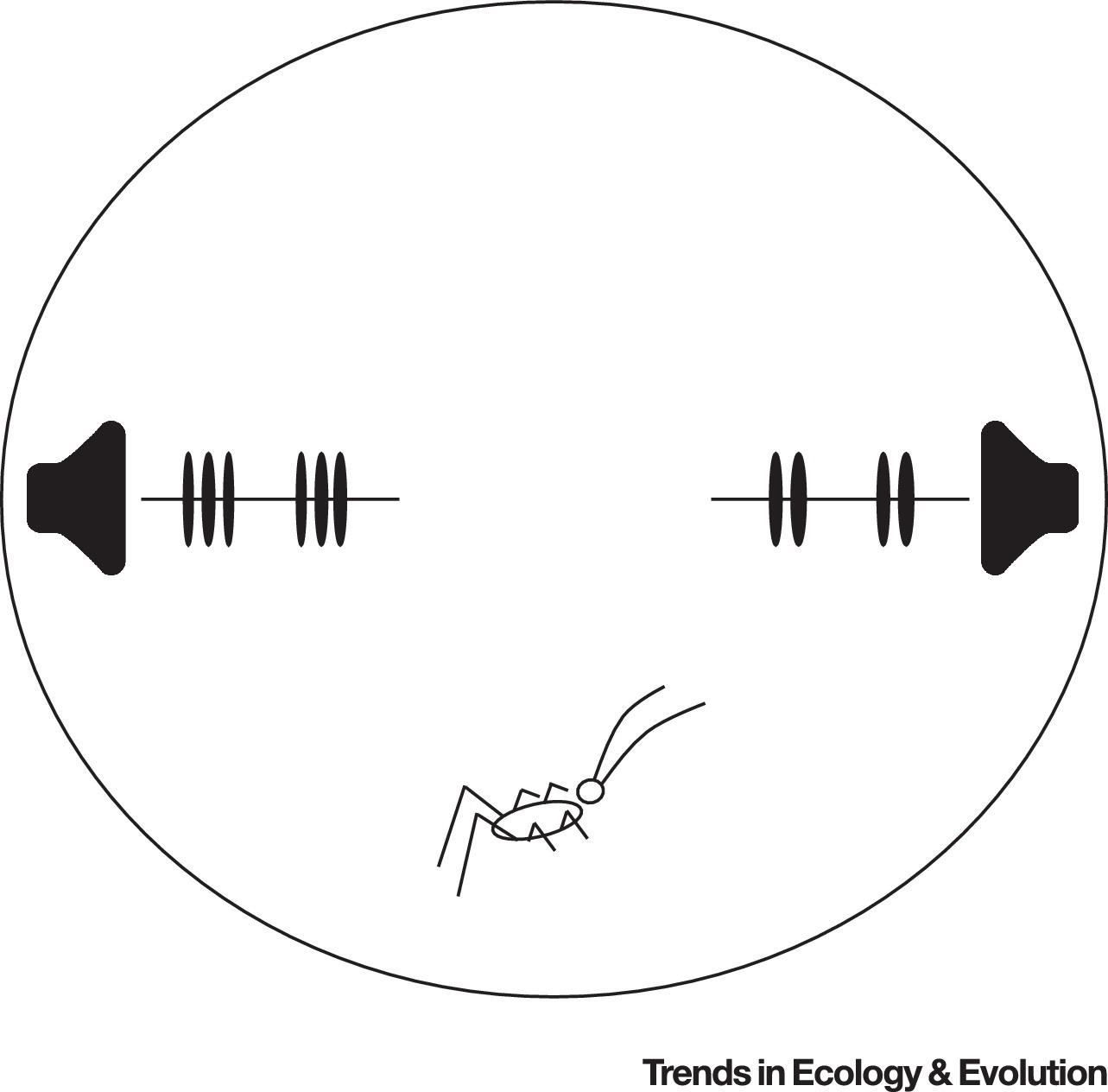 Cognitive Phenotypes and the Evolution of Animal Decisions