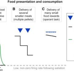 Msh Brain Wiring Diagram Baldor Single Phase Toward A Understanding Of Appetite Control Neuron