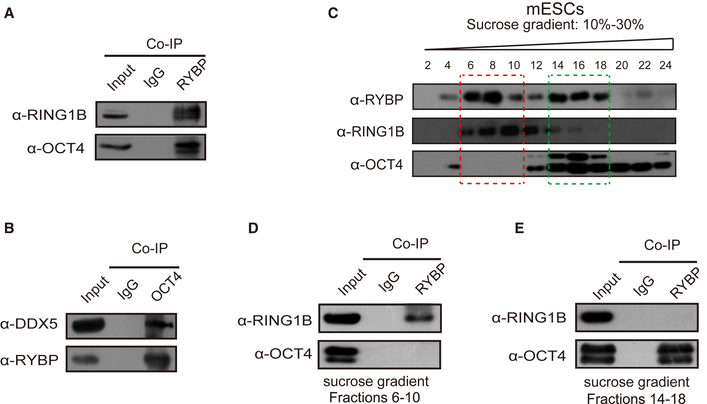 Rna Helicase Ddx5 Inhibits Reprogramming To Pluripotency By Mirna Based Repression Of Rybp And