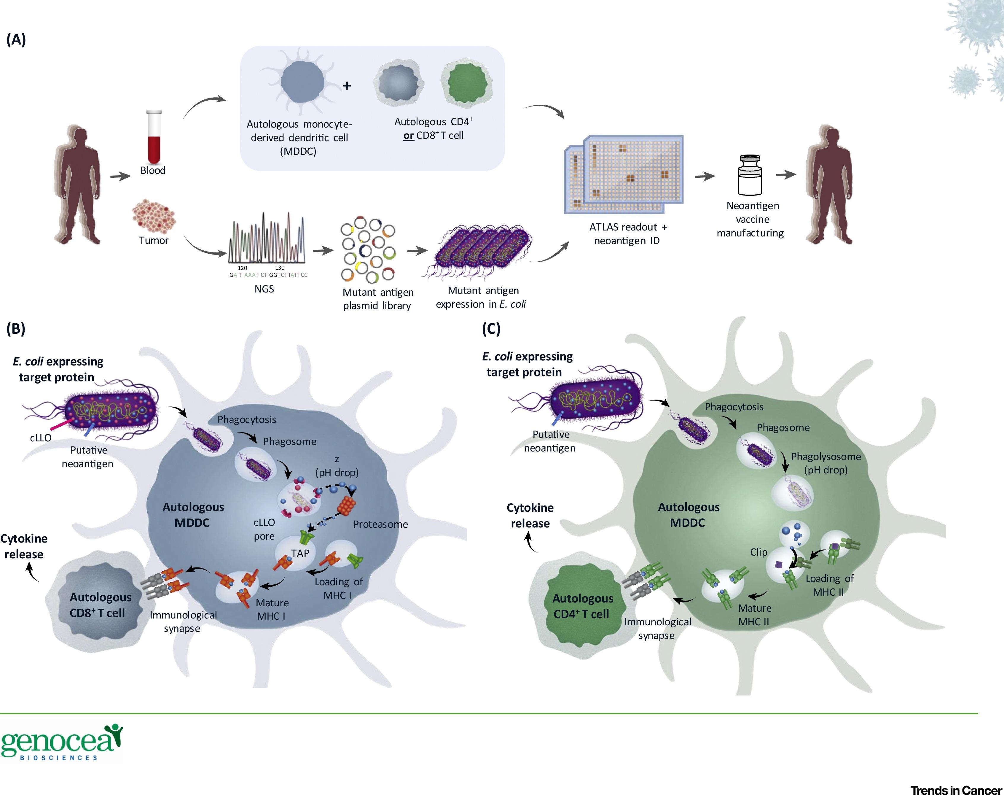 Improving Cancer Immunotherapies Through Empirical