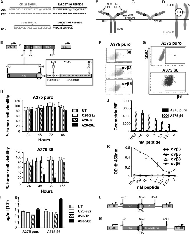 Targeting of Aberrant αvβ6 Integrin Expression in Solid
