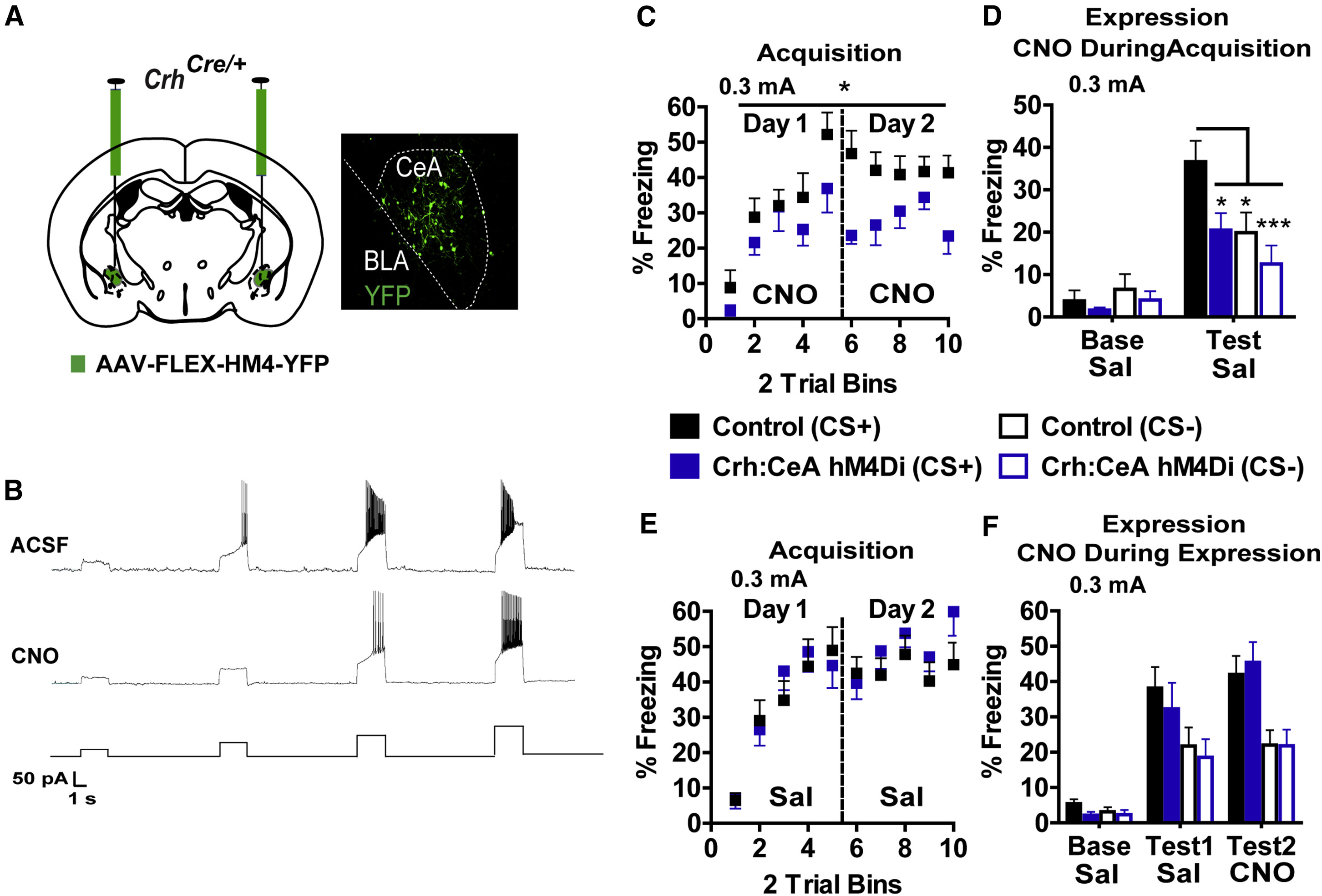 A Central Amygdala Crf Circuit Facilitates Learning About