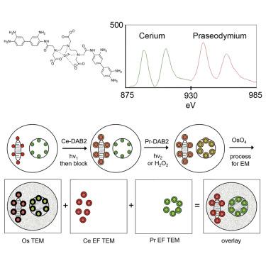 Multicolor Electron Microscopy for Simultaneous