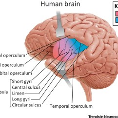 Orbital Frontal Dorsal Lateral Brain Diagram Parts Of The Insula 1972 Super Beetle Wiring An Underestimated Area In Clinical