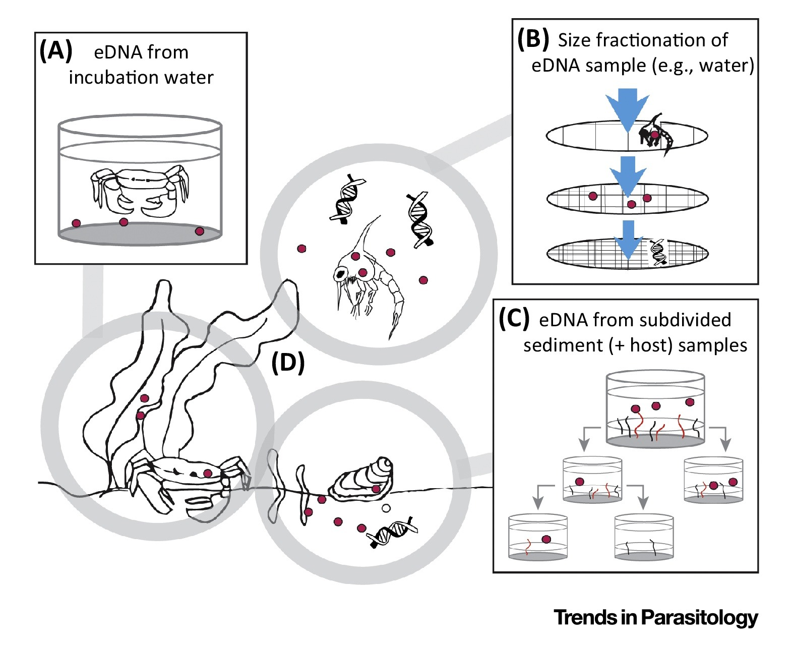 Diverse Applications of Environmental DNA Methods in
