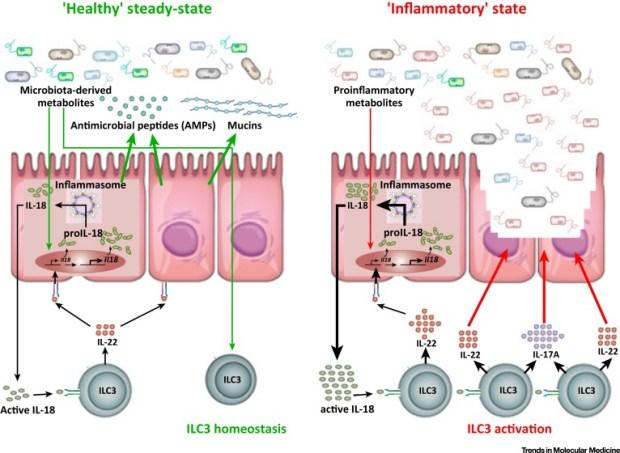 ILC3 Gut Dysbiosis