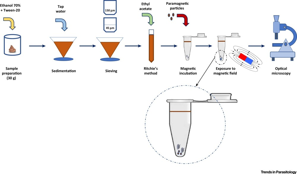medium resolution of diagnosing schistosomiasis with paramagnetic particles