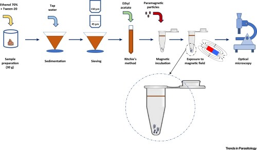 small resolution of diagnosing schistosomiasis with paramagnetic particles