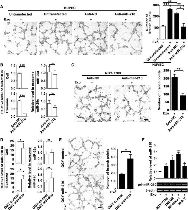 Hepatocellular Carcinoma Cell-Secreted Exosomal MicroRNA