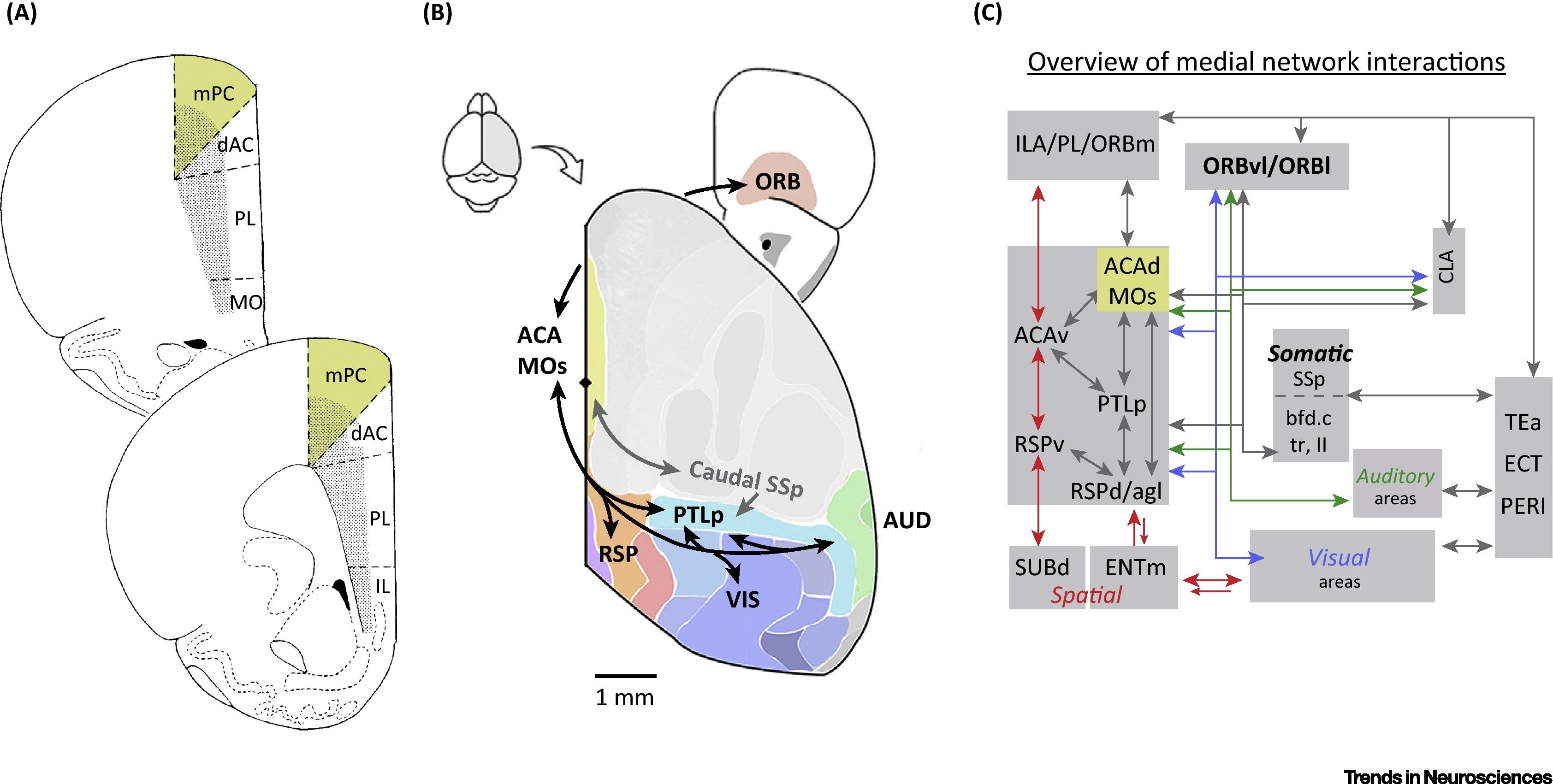 Secondary Motor Cortex Where Sensory Meets Motor In