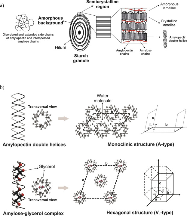 Crystalline morphology of thermoplastic starch/talc