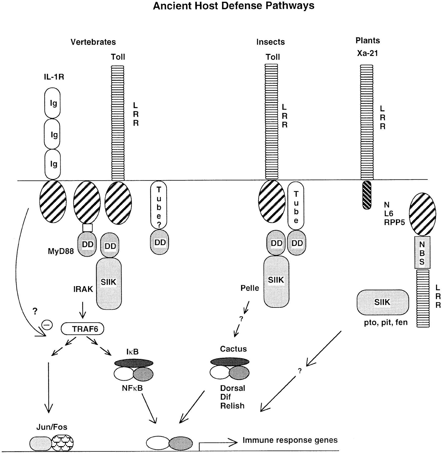 MyD88 Is an Adaptor Protein in the hToll/IL-1 Receptor
