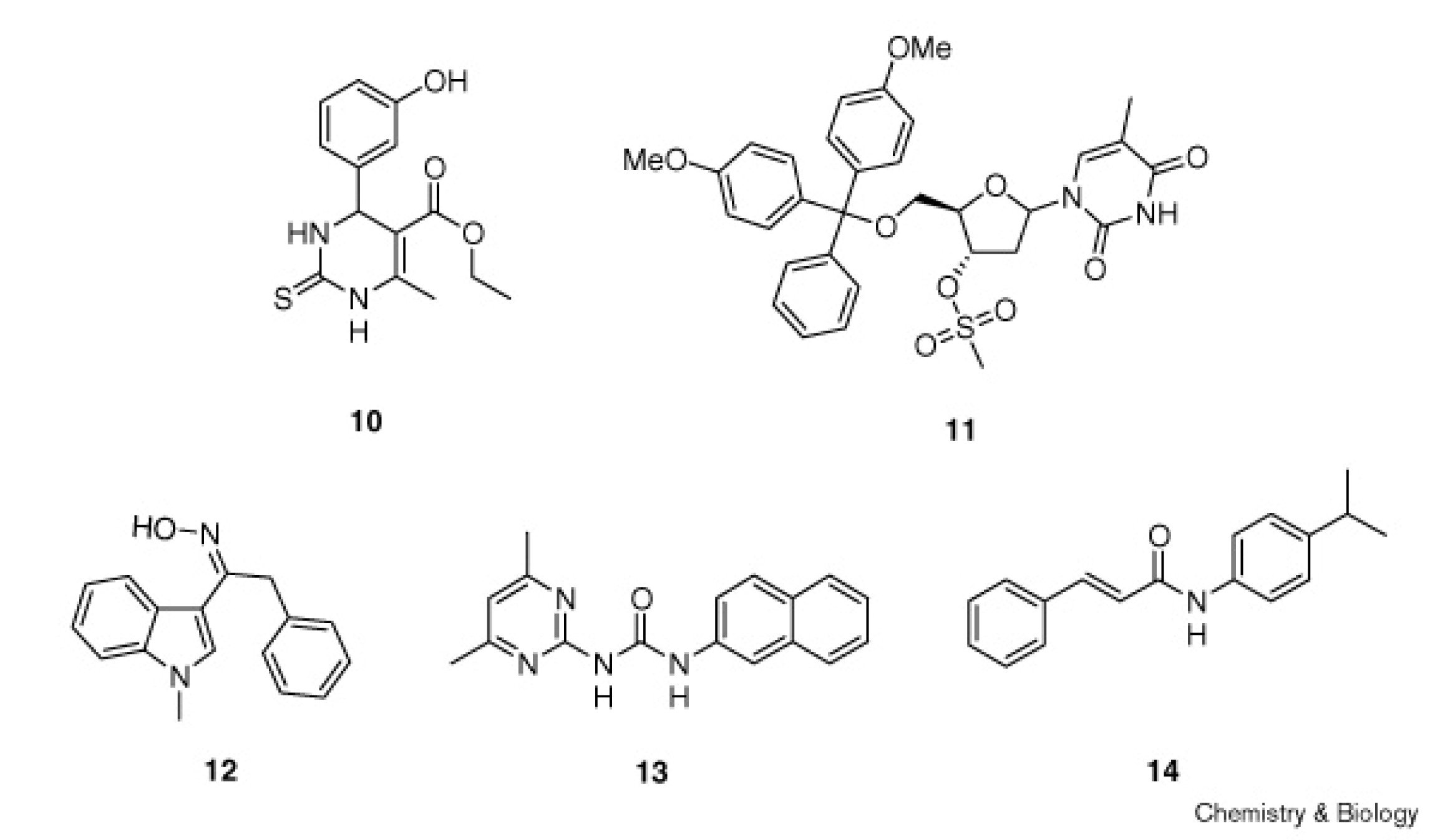 Dissecting Cellular Processes Using Small Molecules