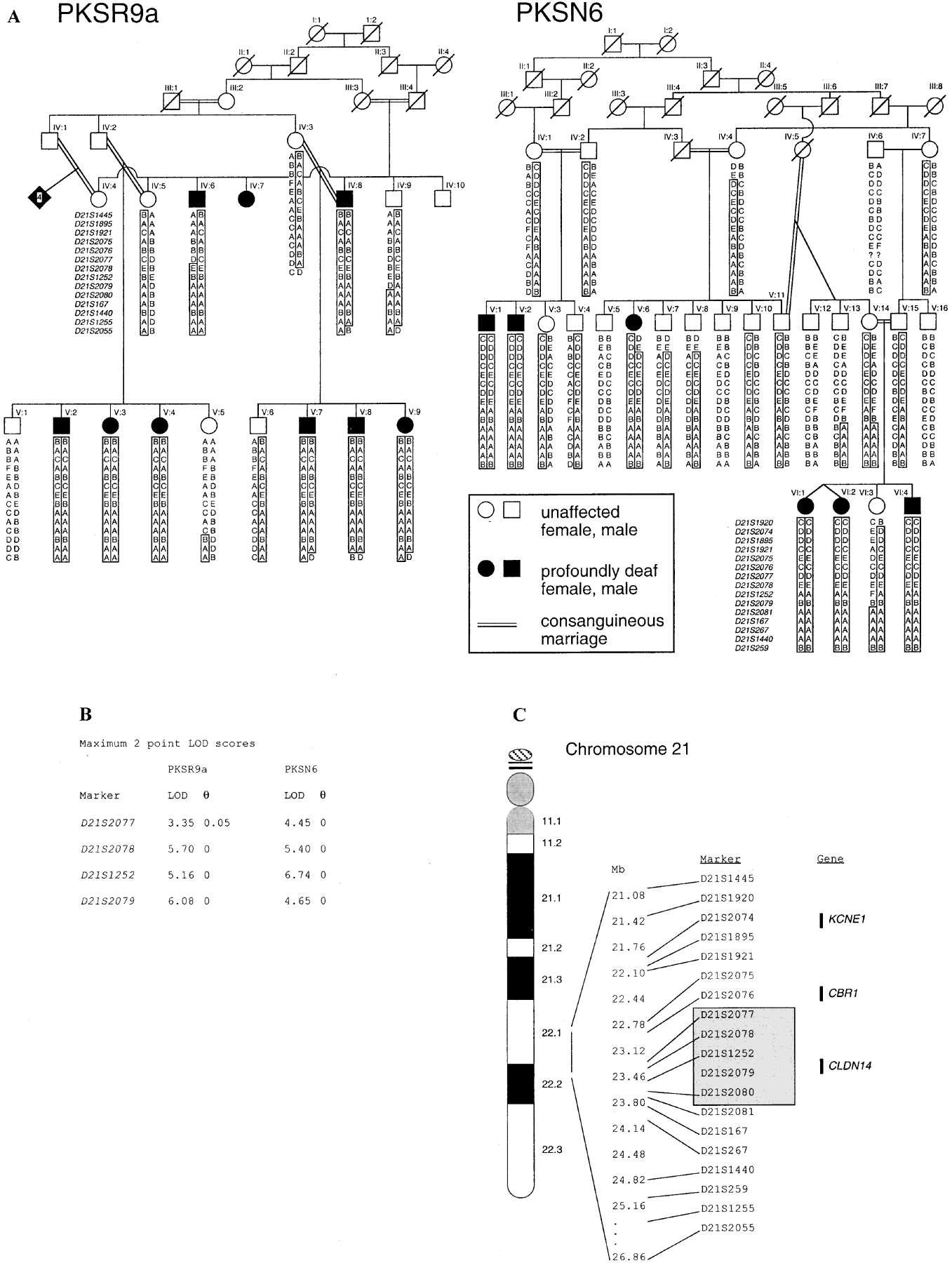 Mutations In The Gene Encoding Tight Junction Claudin 14 Cause Autosomal Recessive Deafness
