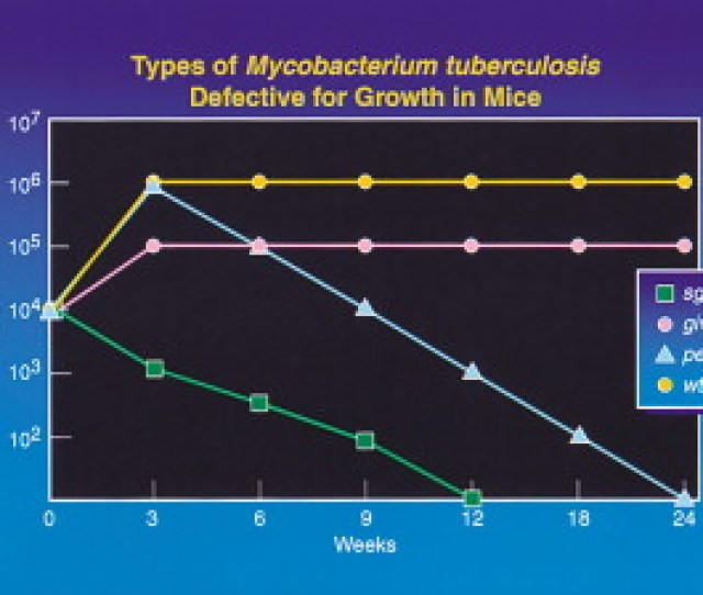 Microbial Pathogenesis Of Mycobacterium Tuberculosis Dawn Of A Discipline Cell