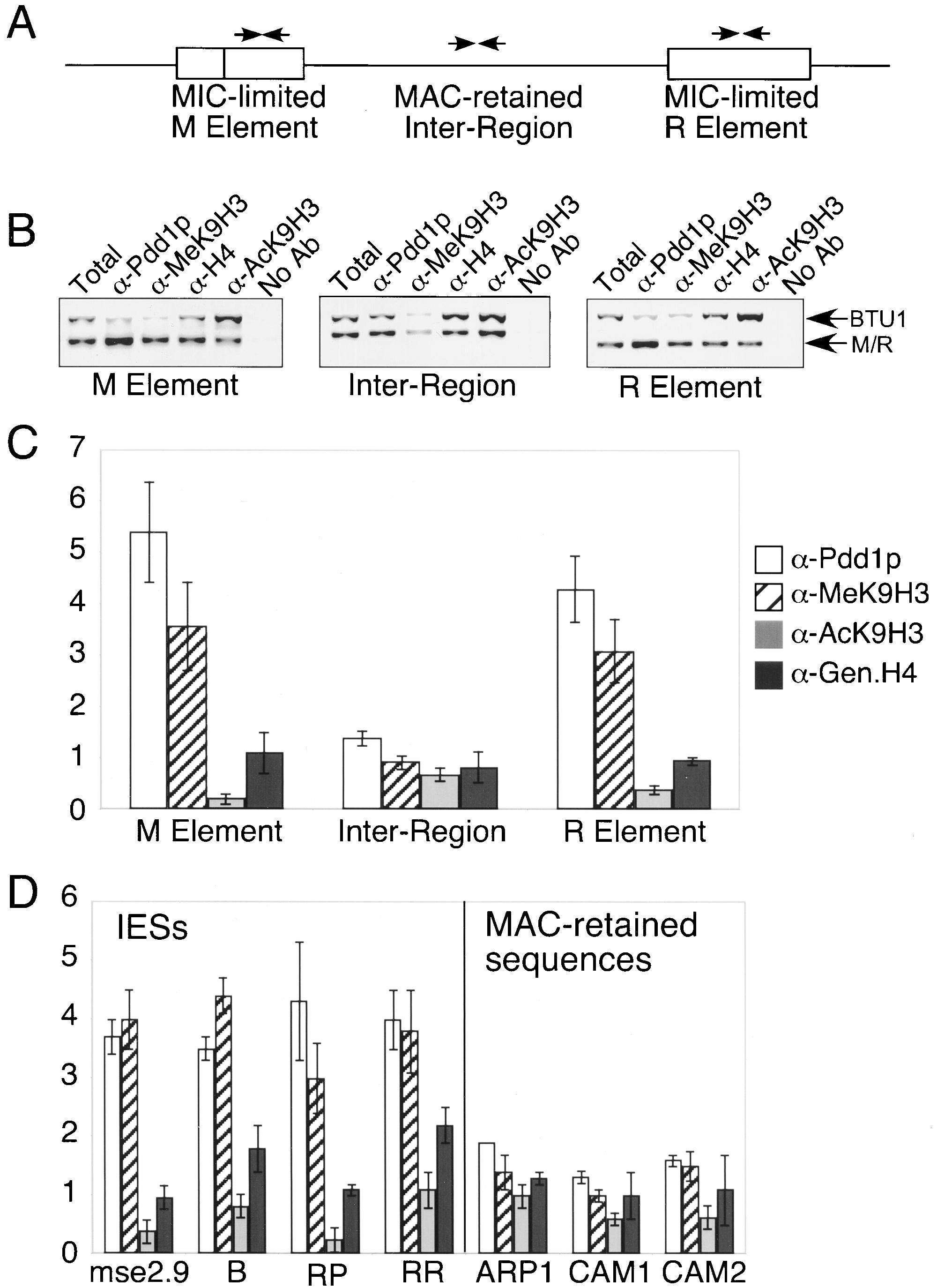 Methylation Of Histone H3 At Lysine 9 Targets Programmed