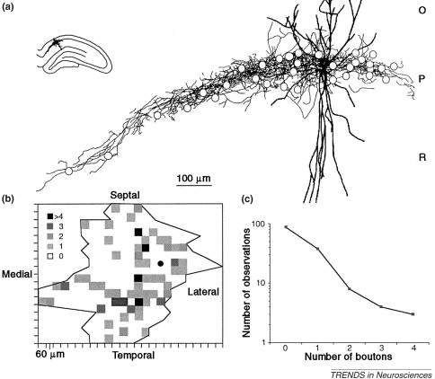 Interneuron Diversity series: Circuit complexity and axon