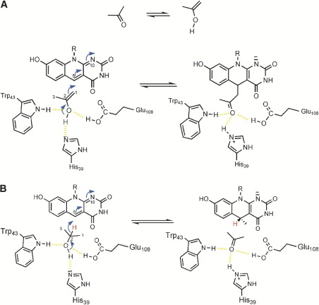 Coenzyme Binding in F420-Dependent Secondary Alcohol