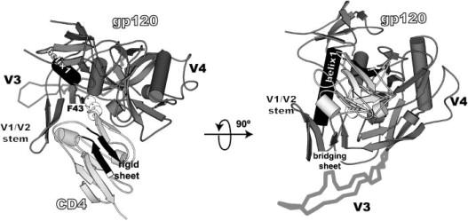 Entropy Calculation of HIV-1 Env gp120, its Receptor CD4