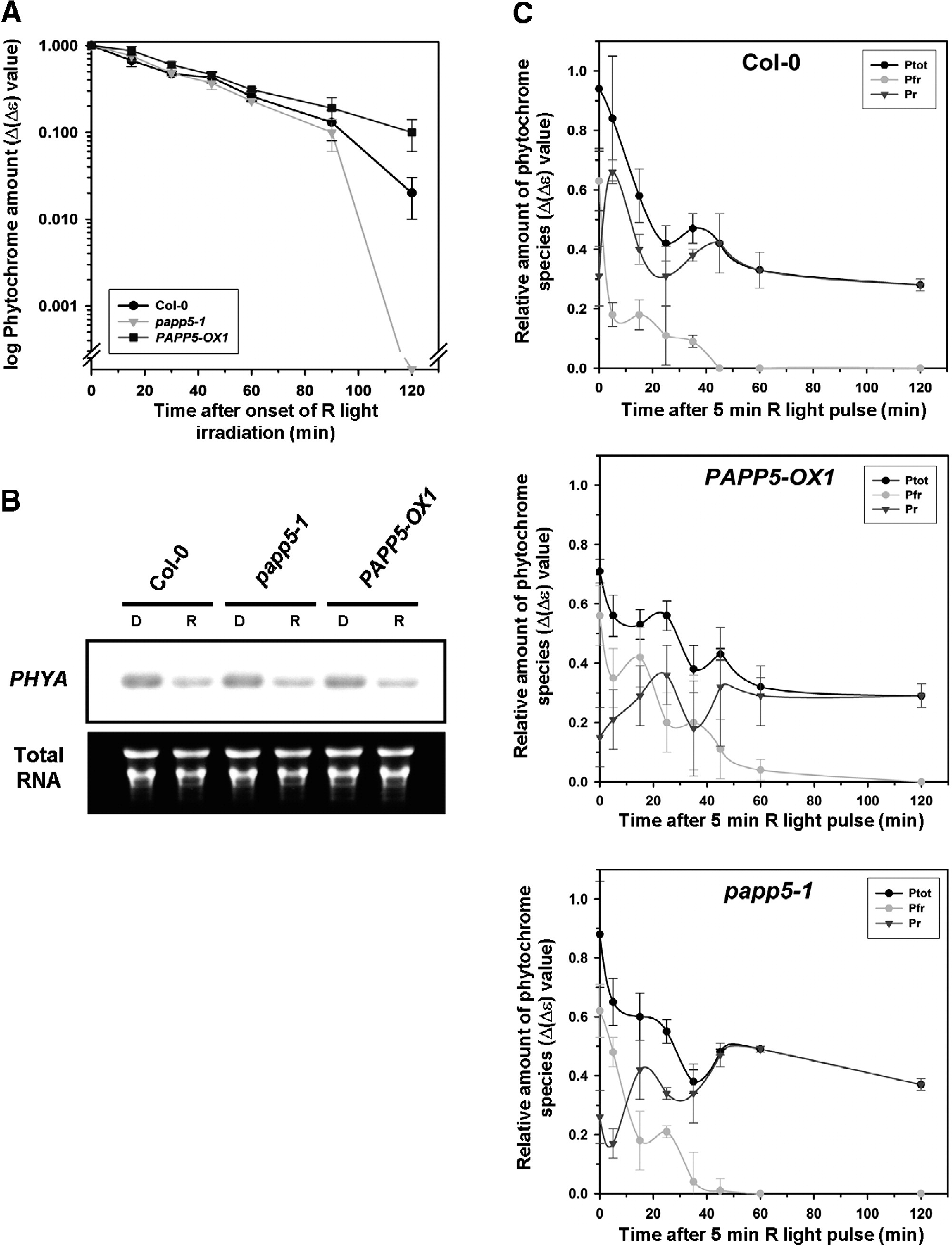 Phytochrome Specific Type 5 Phosphatase Controls Light Signal Flux By Enhancing Phytochrome