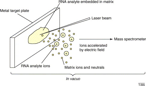 Mass spectrometry of RNA: Trends in Biochemical Sciences