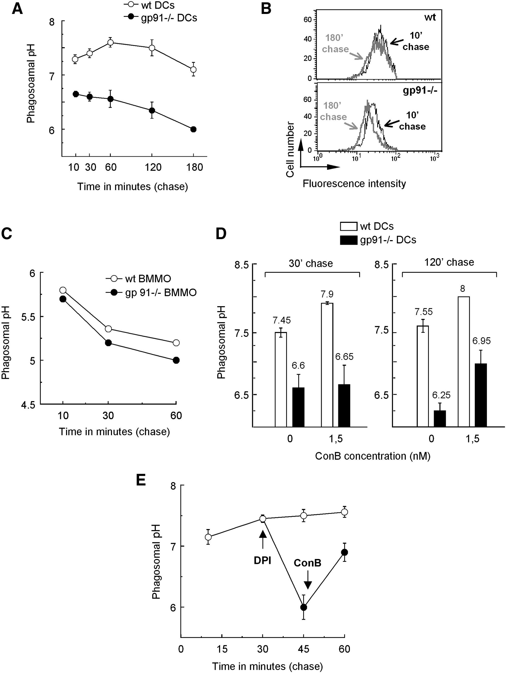 NOX2 Controls Phagosomal pH to Regulate Antigen Processing