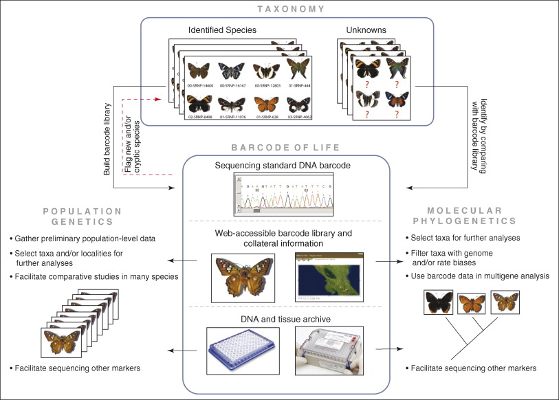 DNA barcoding: how it complements taxonomy, molecular
