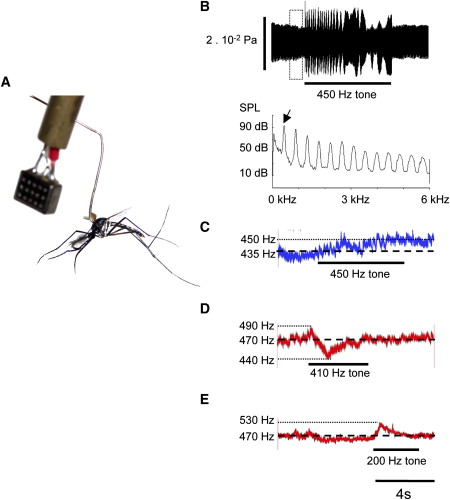 Flying in Tune: Sexual Recognition in Mosquitoes: Current