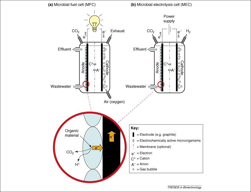 Towards practical implementation of bioelectrochemical